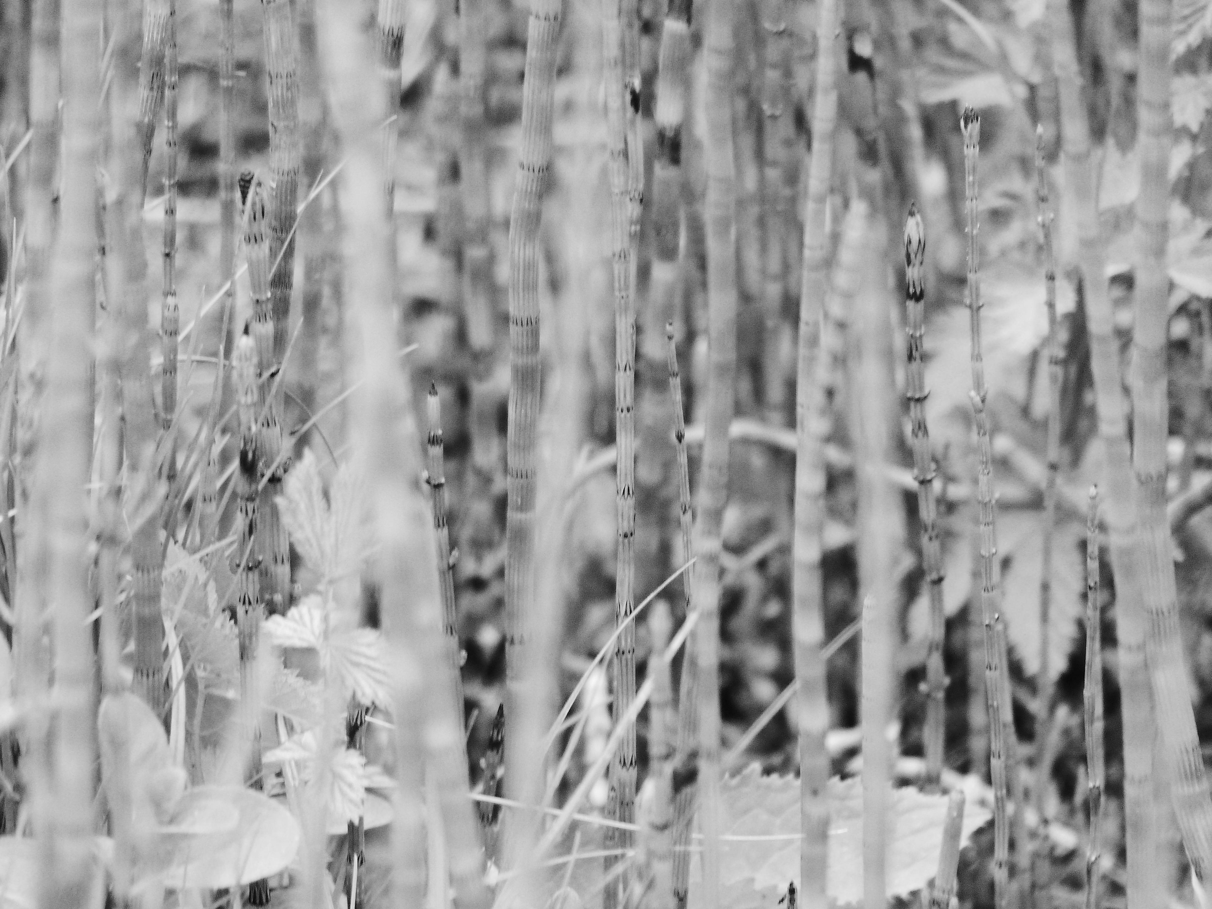 Kinder Zug Spielzeug Kinder Zug Spielzeug Set Batteriebetriebene Motor Zug Set 3 Jahre Alt Und F/ür Kinder Kleinkind Geschenk Motorisierte Action-Z/üge foyar Elektrische Zug Spielzeug